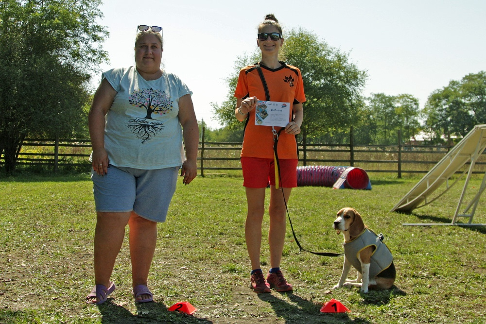 photos from agility competitions