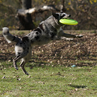 members of the national dog Frisbee tour